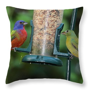 Two Painted Buntings Throw Pillow