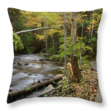 Two Paths Throw Pillow by Karol Livote