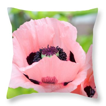 Two Pink Poppies Throw Pillow
