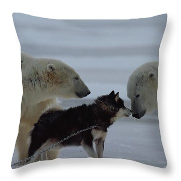 Two Polar Bears Ursus Maritimus Throw Pillow by Norbert Rosing