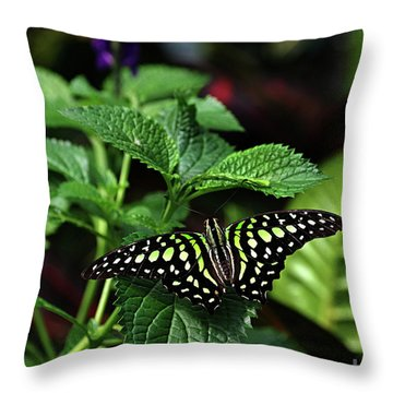 Two Tailed Jay Butterflies- Graphium Agamemnon Throw Pillow