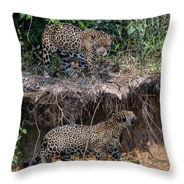 Two To Tango Throw Pillow by Wade Aiken