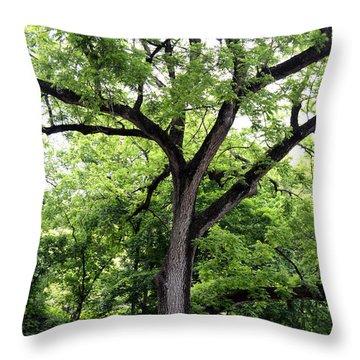 Two Tone Tree Throw Pillow