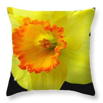 Two Toned Daffodil Throw Pillow by Mikki Cucuzzo