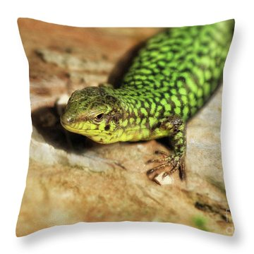 Typical Maltese Lizard Throw Pillow by Stephan Grixti
