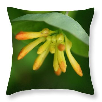 Throw Pillow featuring the photograph Umbrella Plant by Ben Upham III