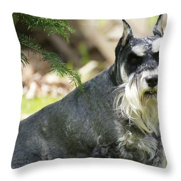 Unaware Throw Pillow by David and Lynn Keller