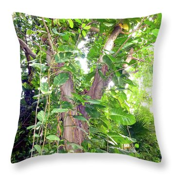 Throw Pillow featuring the photograph Under A Tropical Tree With Vines by Francesca Mackenney