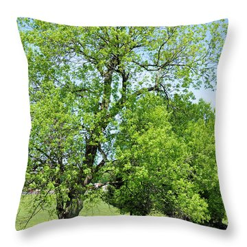 Under The Oak Throw Pillow by Jan Amiss Photography