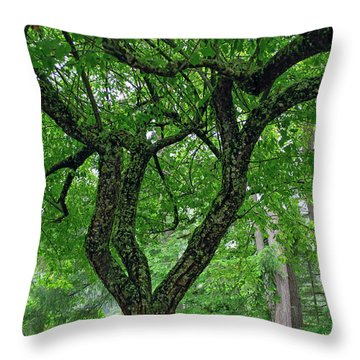 Throw Pillow featuring the photograph Under The Shade Tree by Tikvah's Hope