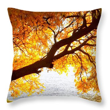 Throw Pillow featuring the photograph Under The Yellow Tree by Viviana  Nadowski