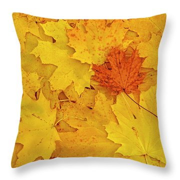 Throw Pillow featuring the photograph Understory by Tony Beck