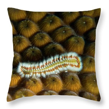 Throw Pillow featuring the photograph Undulating Bristle Worm by Jean Noren
