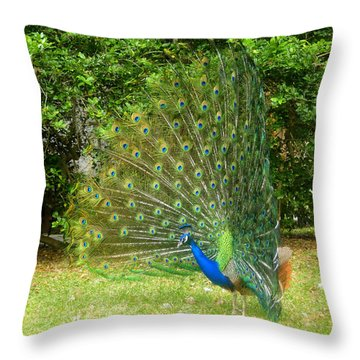 Unimpressed Throw Pillow by David Lee Thompson