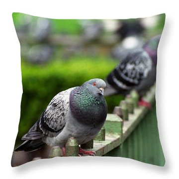 Union Square Pigeons Throw Pillow
