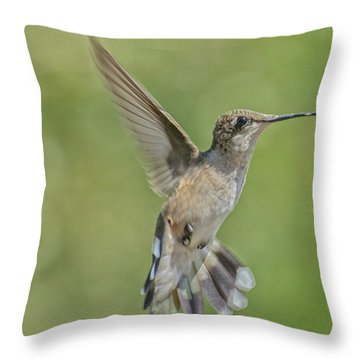 Untitled Hum_bird_four Throw Pillow