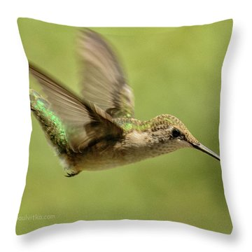 Untitled Hum_bird_one Throw Pillow