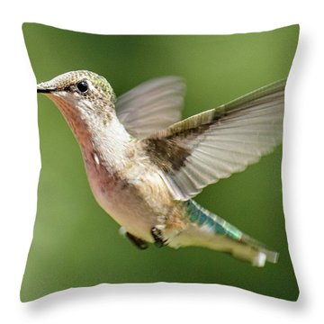 Untitled Hum_bird_two Throw Pillow