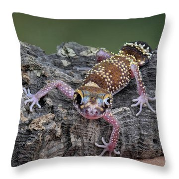 Throw Pillow featuring the photograph Up And Over - Gecko by Nikolyn McDonald