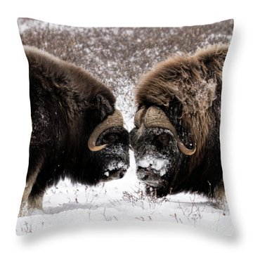 Up Close And Personal Throw Pillow