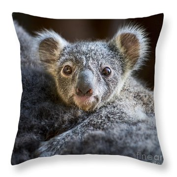 Up Close Koala Joey Throw Pillow