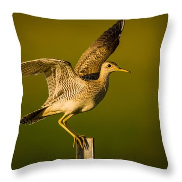 Upland Sandpiper On Steel Post Throw Pillow