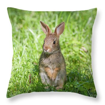 Throw Pillow featuring the photograph Upright Rabbit by Chris Scroggins