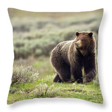 Valley Girl Throw Pillow by Aaron Whittemore