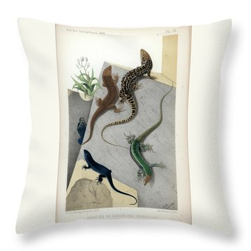 Throw Pillow featuring the drawing Varieties Of Wall Lizard by Jacques von Bedriaga