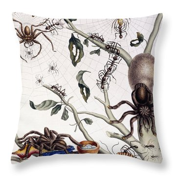 Various Arachnids From South America, 1726  Throw Pillow