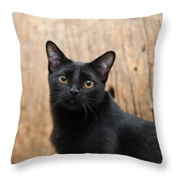 Velvet 2 Throw Pillow