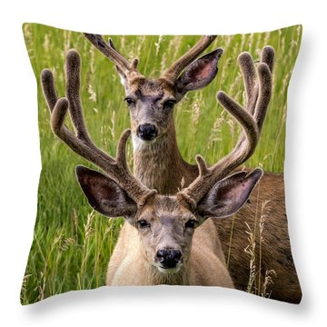 Velvet Bucks Throw Pillow