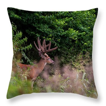 Velvet Crown Throw Pillow