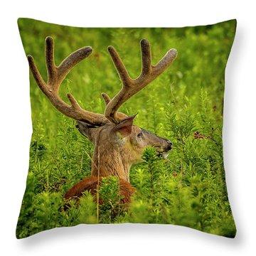 Velvet Eight Throw Pillow