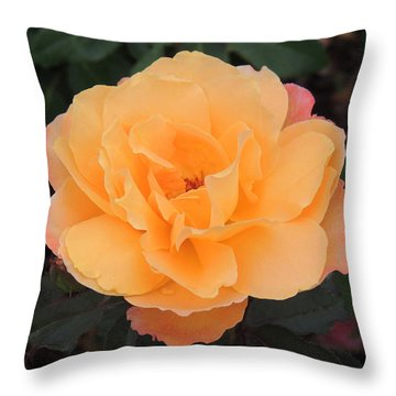 Velvety Orange Rose Throw Pillow