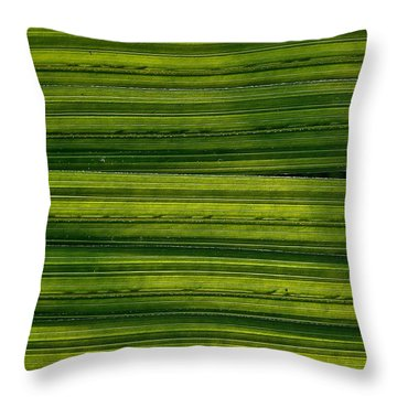 Venetian Blinds Throw Pillow by Tim Good