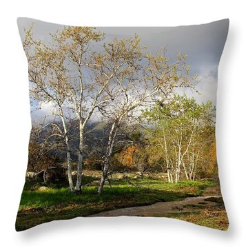 Ventura River Preserve Winter 2017 Throw Pillow