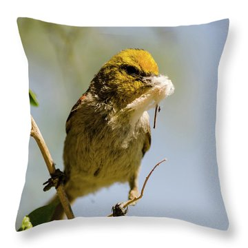 Verdin Building A Nest Throw Pillow