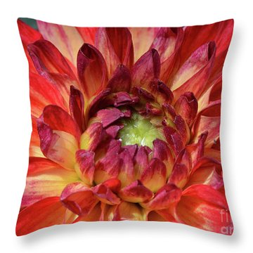 Variegated Dahlia Beauty Throw Pillow