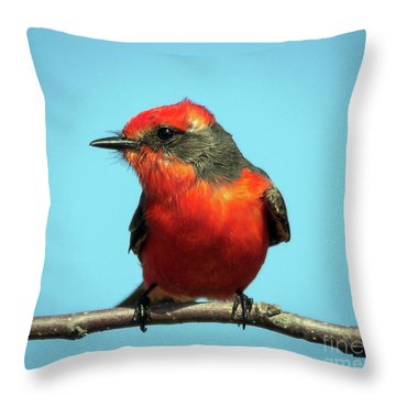 Vermilion Flycatcher - Pyrocephalus Rubinus Throw Pillow