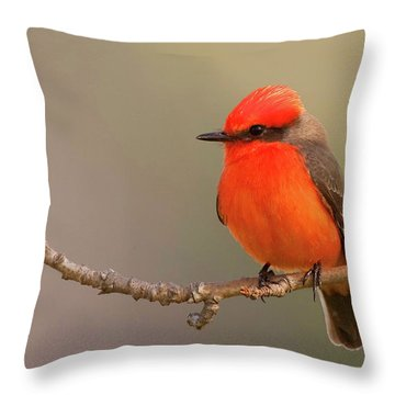 Throw Pillow featuring the photograph Vermilion Flycatcher by Ram Vasudev