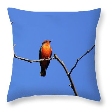 Vermillion Flycatcher Throw Pillow