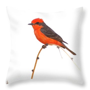 Vermillion On A Branch  Throw Pillow