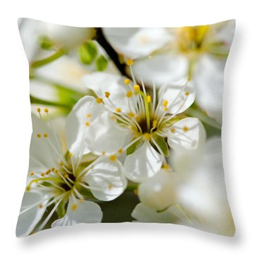 Vermont Apple Blossoms Throw Pillow