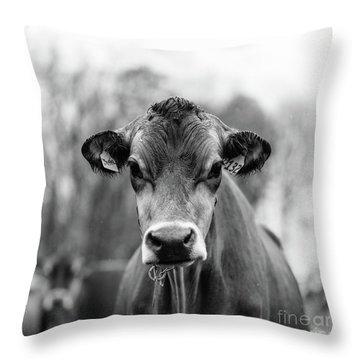 Vermont Cow Square Throw Pillow