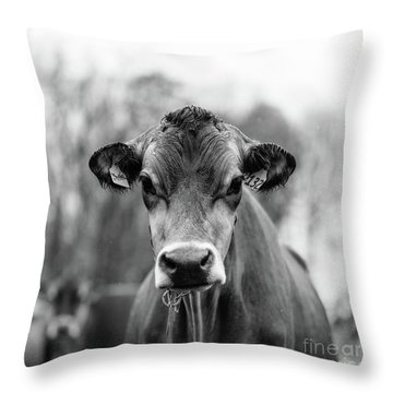 Throw Pillow featuring the photograph Vermont Cow Square by Edward Fielding
