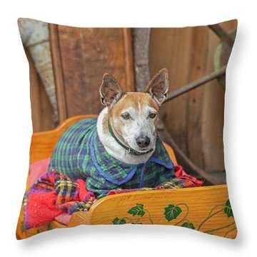 Throw Pillow featuring the photograph Very Old Pet Dog In Clothes On Own Bed by Patricia Hofmeester