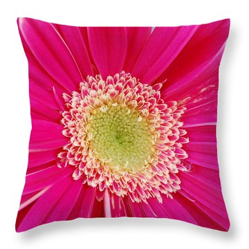 Vibrant Pink Gerber Daisy Throw Pillow by Amy Fose