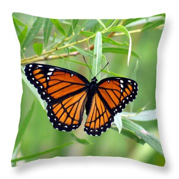 Viceroy Butterfly 2 Throw Pillow by George Jones