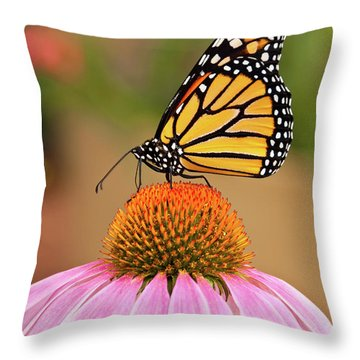 Monarch Butterfly On A Purple Coneflower Throw Pillow by Jeff Goulden